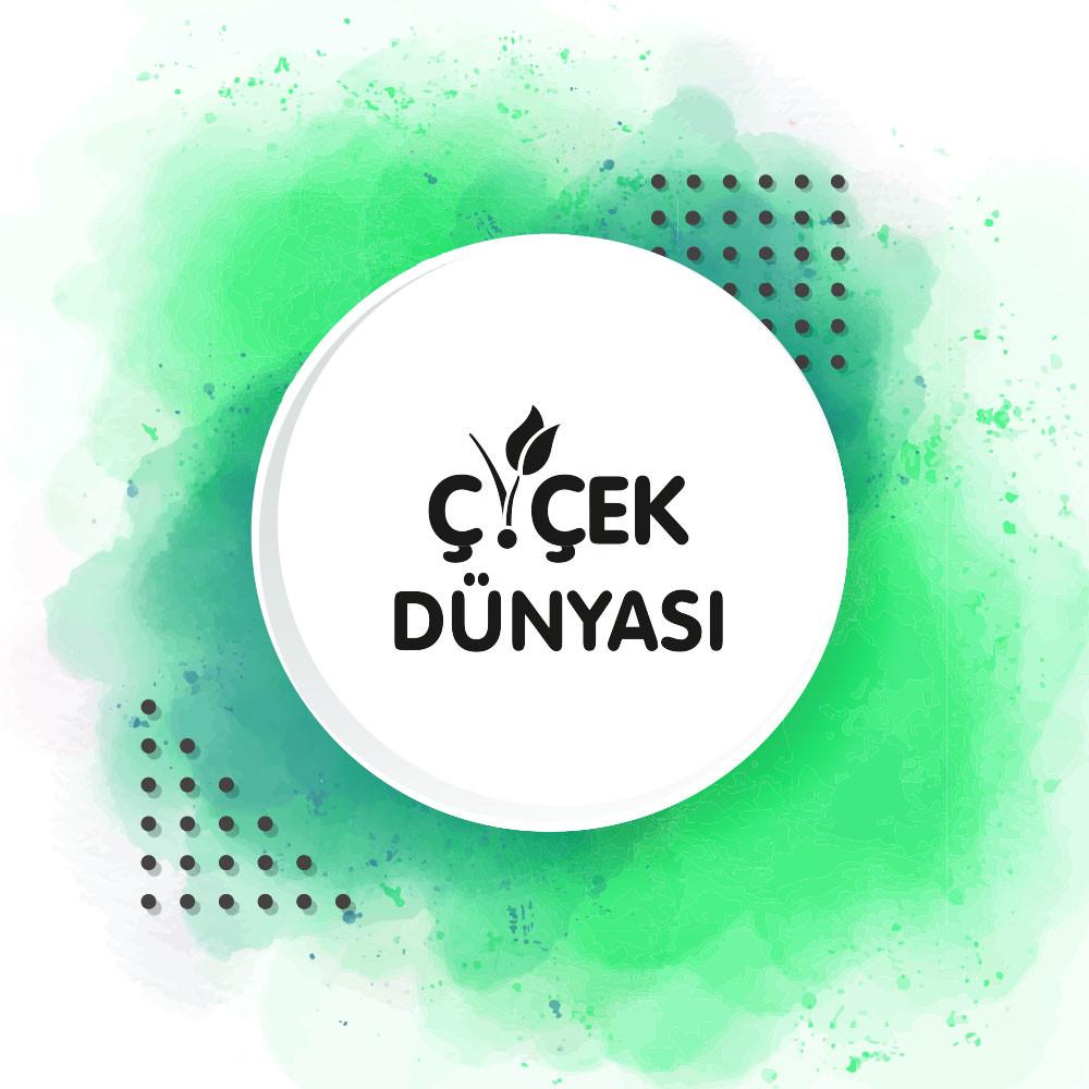 Dek Dizayn - -